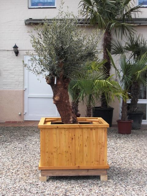 Spezielle Pflanzkübel für Palmen und Olivenbäume beheizbar