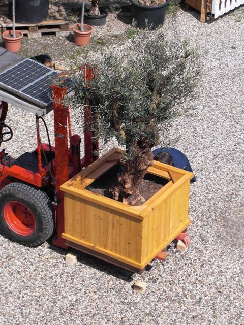 Pflanzkübel beheizt, für Palmen, Olivenbäume, mediterrane Pflanzen